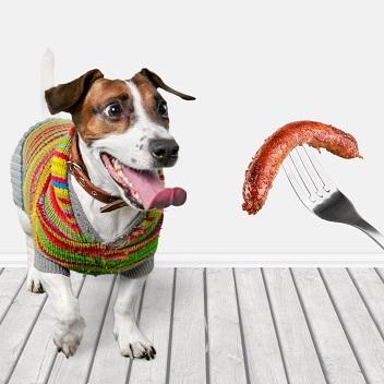 האכלת מזון אדם לכלבים