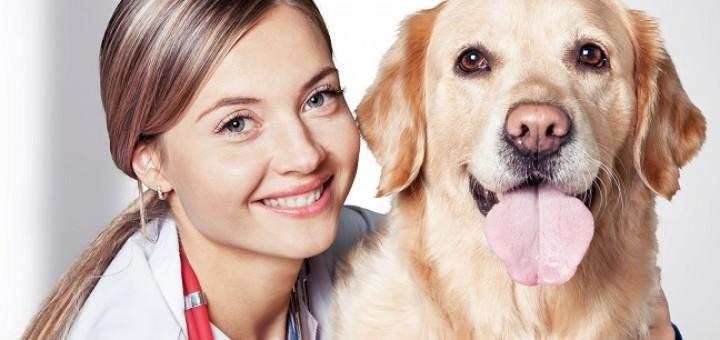 וטרינר עם כלב